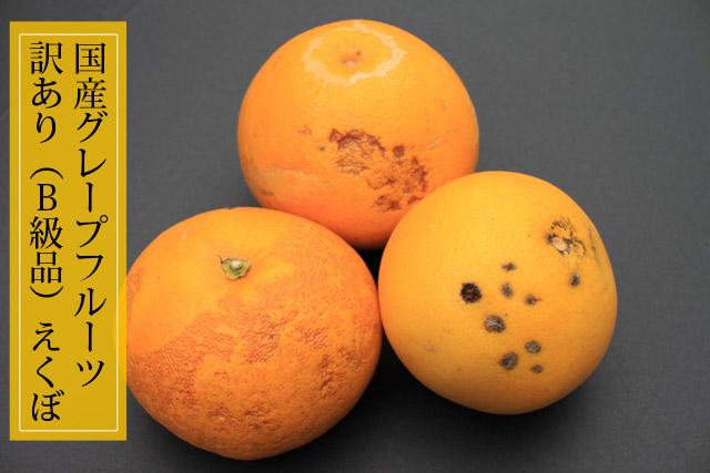 国産グレープフルーツ