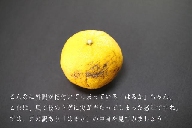 はるか柑橘 はるかみかん