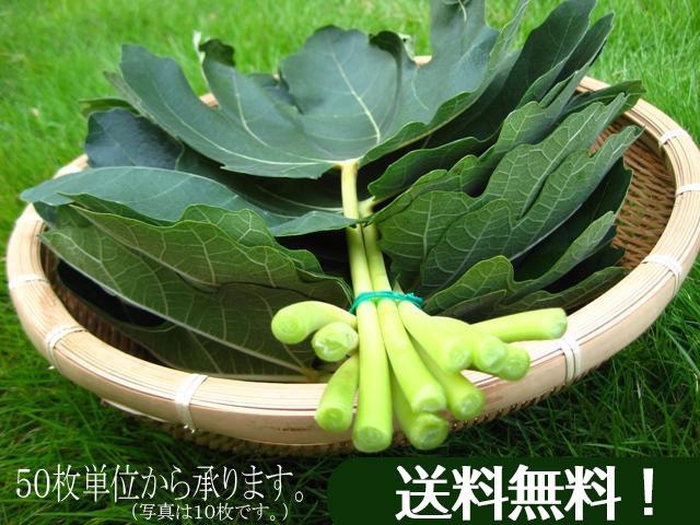 イチジクの葉を農家直送お届けします。