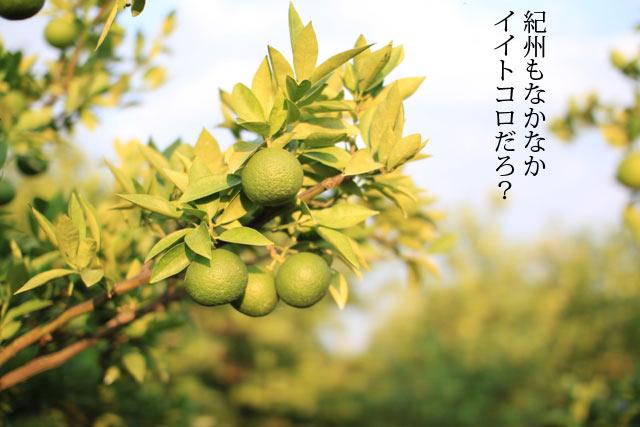 http://www.kannonyama.net/kabosu/kabosu02.jpg
