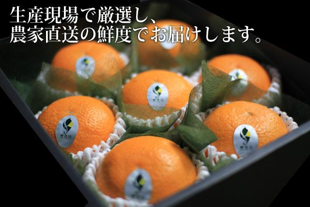 清見オレンジ 高級