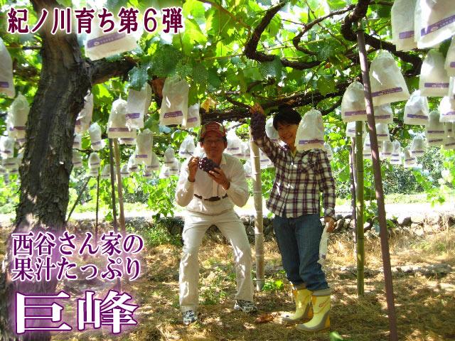 西谷さん家の果汁たっぷり巨峰