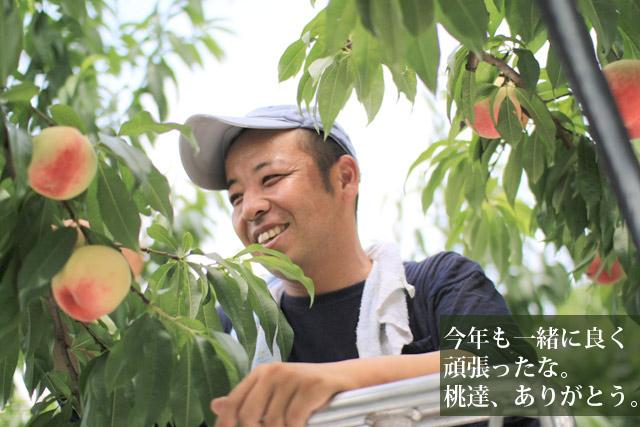 園田さんの渾身作の桃を朝もぎの熟れ熟れで発送します!