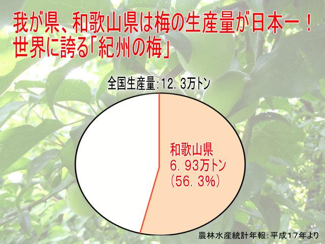 和歌山県は梅の生産量が日本一!なんと全国の半分以上は和歌山産なんです!!