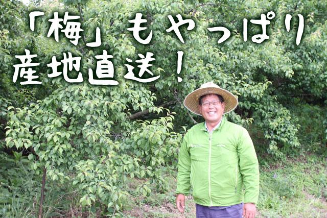 農家仲間の正木さんが作る紀州梅