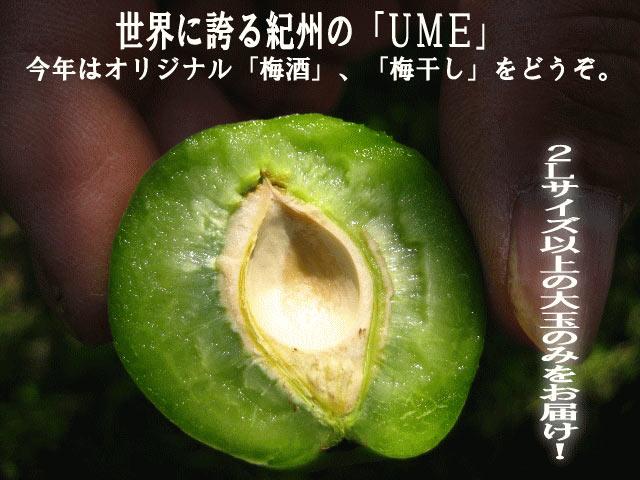 世界に誇る和歌山の「UME」!